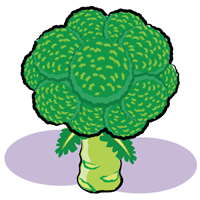 broccoli - English for Kids - ESL Picture Dictionary