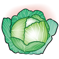 cabbage - English for Kids - ESL Picture Dictionary