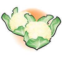 cauliflower - English for Kids - ESL Picture Dictionary