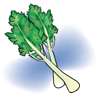 celery - English for Kids - ESL Picture Dictionary