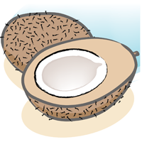 coconut - English for Kids - ESL Picture Dictionary