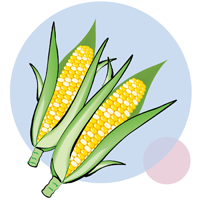 corn - English for Kids - ESL Picture Dictionary