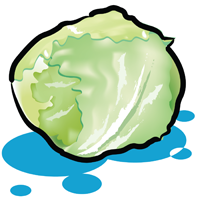 lettuce - English for Kids - ESL Picture Dictionary
