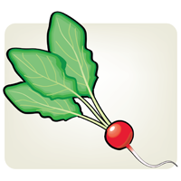 radish - English for Kids - ESL Picture Dictionary